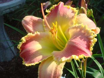 Wide Awakelg11 WIDE AWAKE, by Dave Mussar on the daylily teeth blog