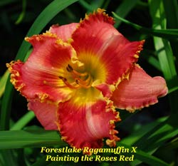P C 11 What are daylily teeth? Larry Welch