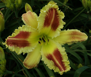 outerlimits REAP THE WHIRLWIND, On the Daylily Teeth Blog