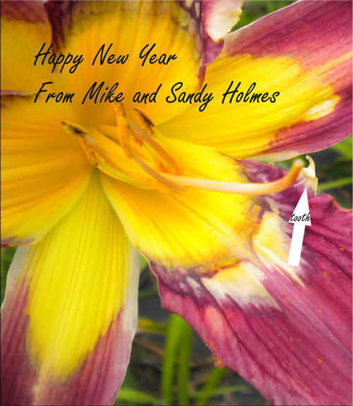 happynewy Patterned Teeth a New Beginning, by Mike Holmes on the Daylily Teeth Blog